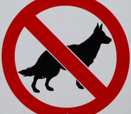 zabrana-za-pse