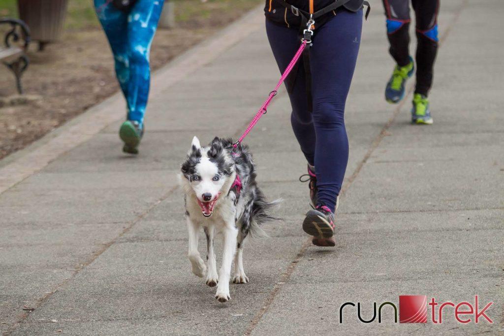 Alba by Run trek