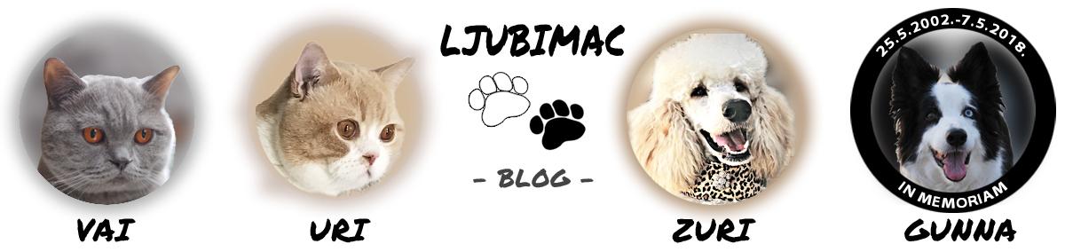 Ljubimac – blog o odrastanju i dogodovštinama jednog lajavca i dva mačkoslavca